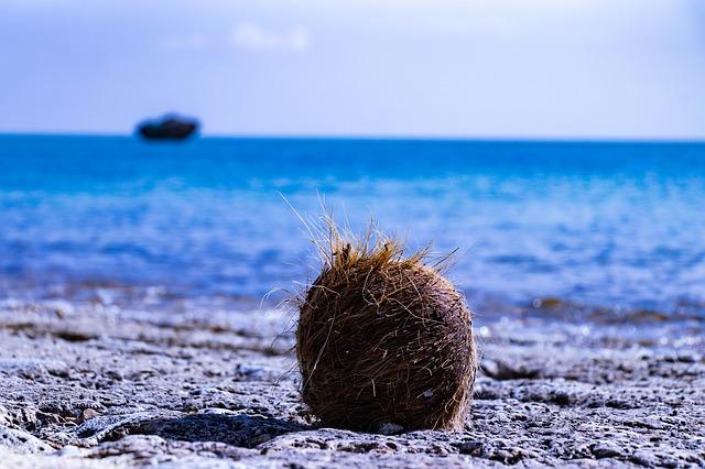 Kokosový ořech na pláži